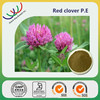 Alibaba China factory bulk in stock red clover plant extracts, stock products red clover extract isoflavones 8% 40%