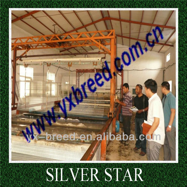 factory direct small poultry house in Algeria