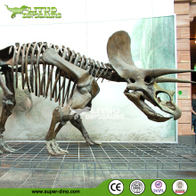 Outdoor Life Size Dinosaur Skeleton
