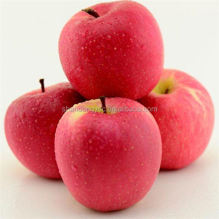 China fresh fuji apple green apple gala apple for exporting