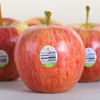 best fresh apple supplier from China