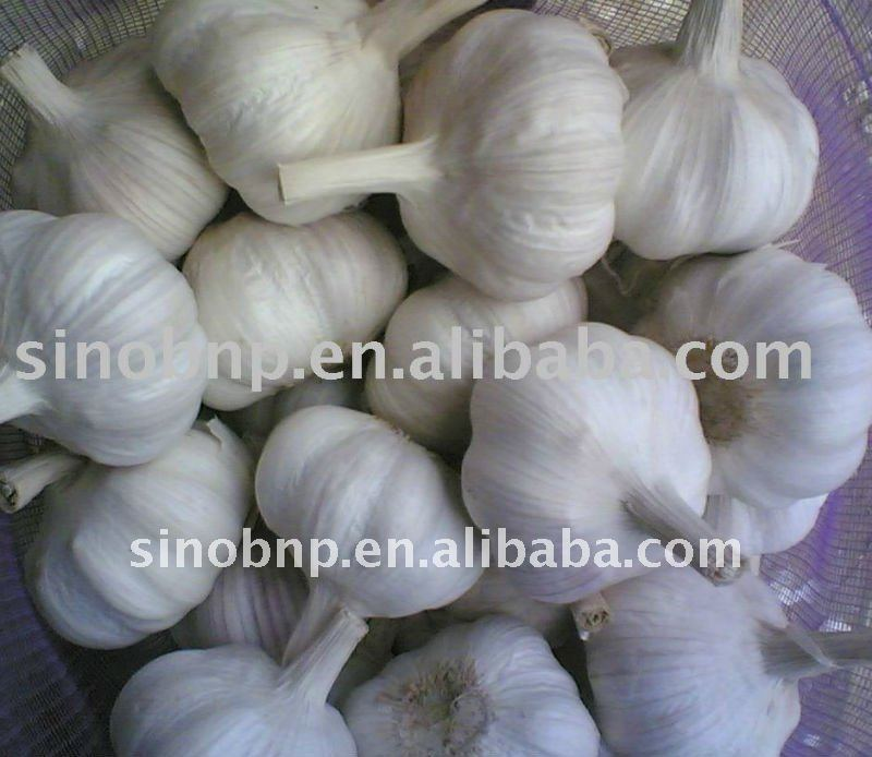 BNP supplies hot sale Natural 100% Garlic Extract powder or oil Allicin and Alliin