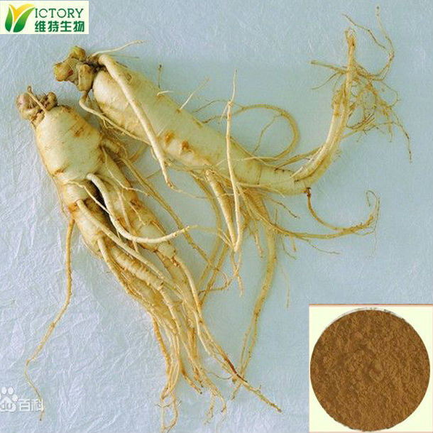 Organic korean red panax ginseng extract powder 10:1