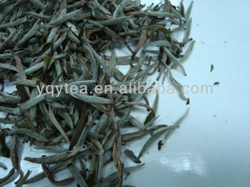 White silver needle tea