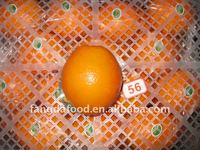 Chinese best price fresh honey navel orange