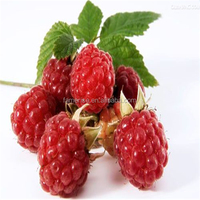 Professional manufacturer supply GMP100% Organic raspberry seed extract