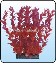 2014 High quality and relatively cheap aquarium live plants