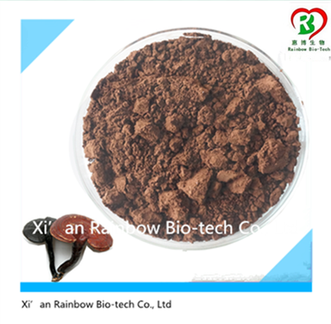 ganoderma lucidum mushroom Brand new ganoderma lucidum extract red reishi extract red reishi mushroom extract plant extract