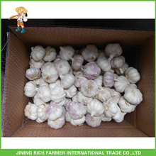 Sell Chinese Fresh Red Garlic Garlic Farm