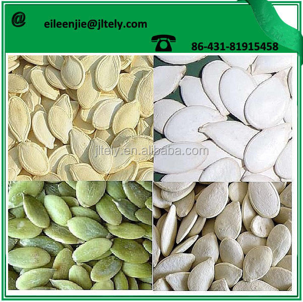 pumpkin seeds raw fresh pumpkin seeds