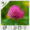 Red Clover Extract powder for health care products