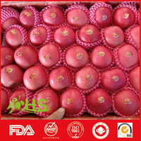 88/125 red fuji fresh apples exporter of china fruit