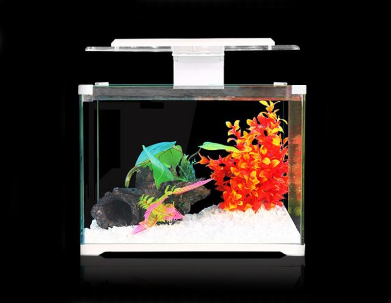 Mini fish tank with led light