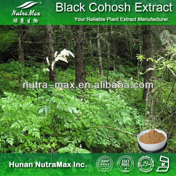 High Quality Black Cohosh Extract Powder Triterpenoidal Saponin Triterpene Glycosides
