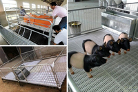 Pig farrowing crate/pig equipment/poultry farm equipment