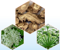Raw medicine material Traditional Chinese Herbal Medicine heracleum