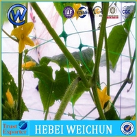 Plastic PP pea and bean Plant support trellis net plastic cucumber vegetable climbing net