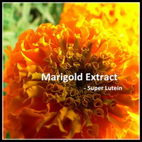 Marigold extract(Tagetes erecta L.) with Lutein of Natural Pigment for Chicken Feed