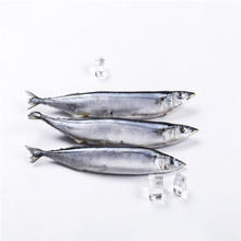 Fresh Material Sea Frozen Whole Round Pacific Saury