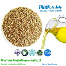 Coriander Seed Oil Popular in Europe and America Market