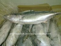 Morocco Frozen Fillet / Whole / Steak Piece Cartons Packaging Tuna Fish