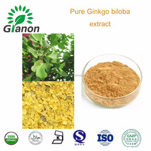 100% Nature Pure Ginkgo biloba extract CP2015