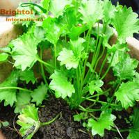 High quality Centella Asiatica p.e.