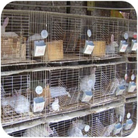 high quality wire mesh rabbit cage with low price from factory