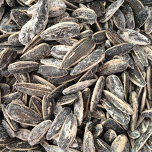Supplying Chinese Roasted Salted 5009 Sunflower Seeds with Good Quality For Sales