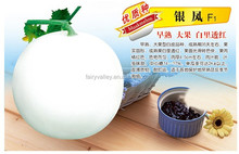Chinese F1 Hybrid Melon Seeds For Growing Orange Red Flesh-Silver Phoenix F1