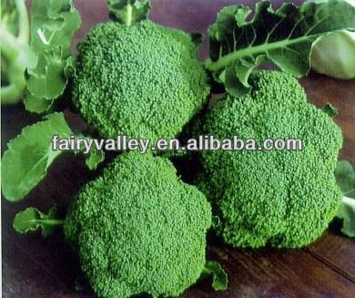 F1 Hybrid Baby Broccoli Seeds For Sale