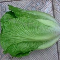 Artificial lettuce decoration plastic vegetables plastic vegetables and fruits plastic vegetables in china