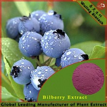100% Natural Bilberry Extract,Bilberry Extract Powder,Bilberry Plants For Sale