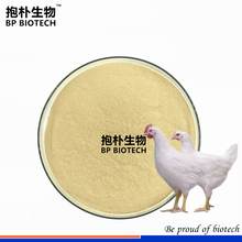 Feed Enzyme Xylanase,Enzyme For Chicken Feed