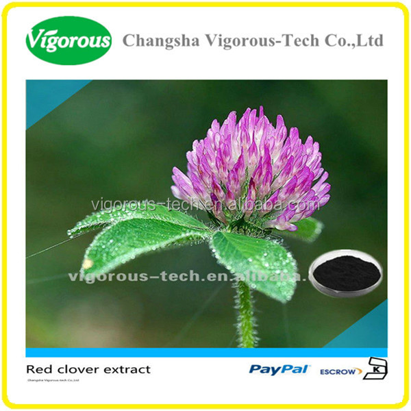 100% Natrual Red Clover Extract Isoflavones Powder/ Red Clover Extract Powder/ Red Clover Extract