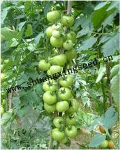 hybrid vegetable seeds high yield quality tomato seeds