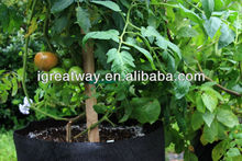 coated non woven polypropylene poly bag for grape for plants (1 gal to 1200 gal)