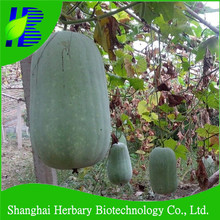 Insect resistance white peel hybrid Chinese winter melon for sale