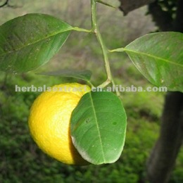 Grapefruit Seed Extract, Citrus paradisi, Extract Ratio:10:1