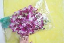 Reasonable price classical hybrids blooming orchids live dendrobium