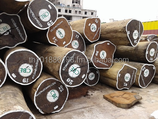 exotic popular wood logs