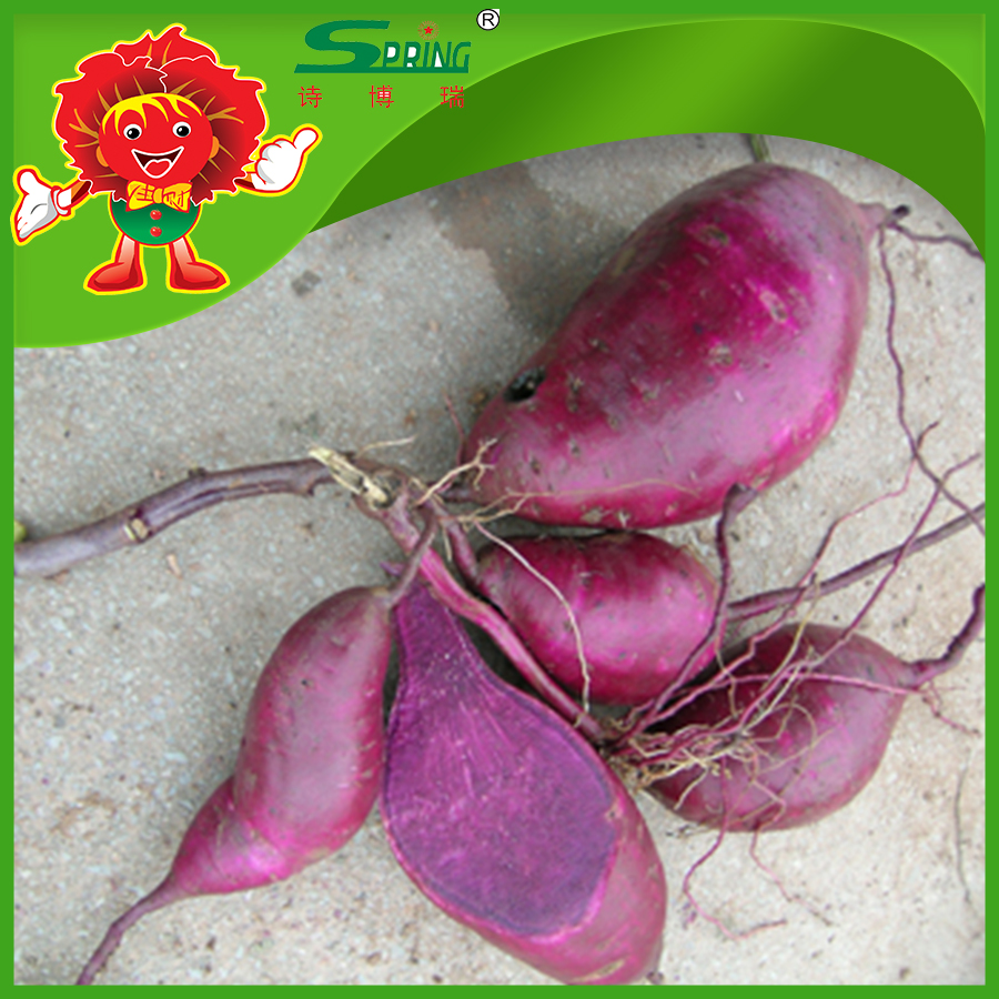 Fresh vegetables fresh potatoes organic Chinese purple sweet potato for sale
