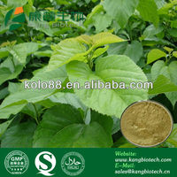100% Natural Skin Whiten Mulberry Leaf Extract (China Manufacturer)