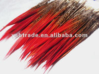 pheasant feather factory supply dyed natural pheasant tail feather for carnival or flower decoration