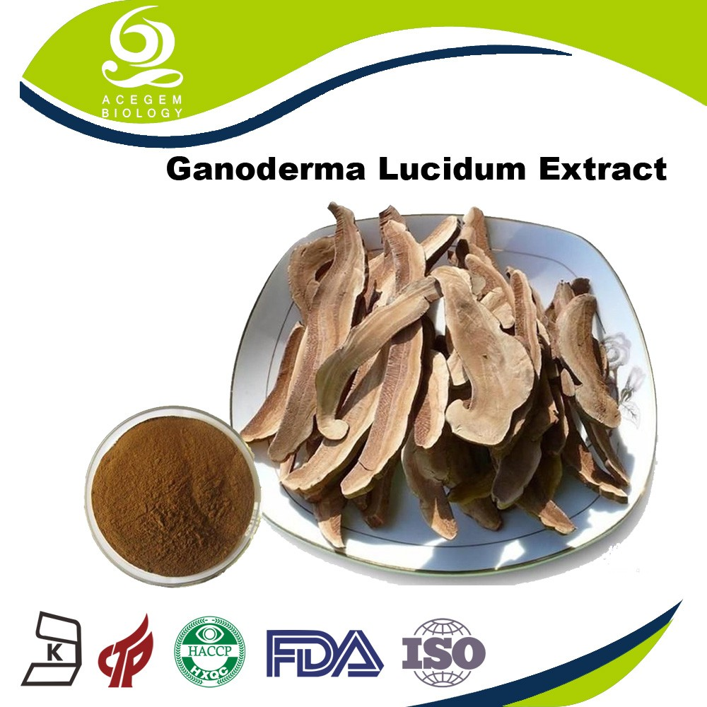 Free Samples Ganoderma Mushroom Extract / Ganoderma Green Tea