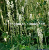 Good Quality black cohosh extract