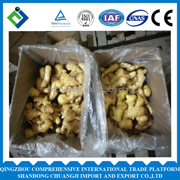 chinese fresh young mesh bag ginger with high quality