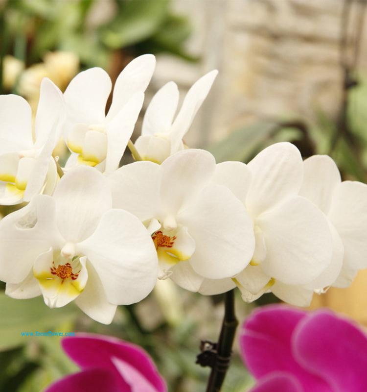 Flores cortadas frescas al por mayor de flores frescas for Decoracion hogar al por mayor