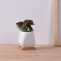 Succulents grow white ceramic indoor pots with bamboo tray