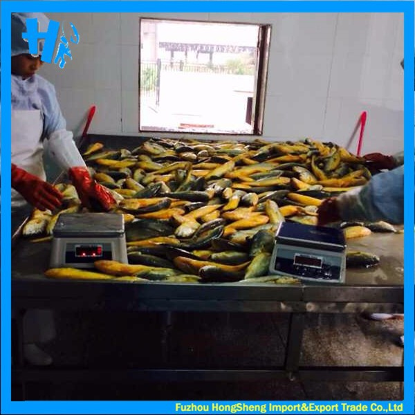 Frozen yellow croaker with competitive price